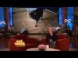 Crazy Kitten On Ellen DeGeneres Show