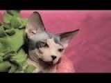 Crazy Cat Lady Explained