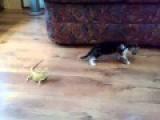 Cat Has Amazing Reaction To A Vicious Lizard