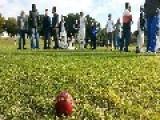 Cricket Umpire Dies After Ball Strikes Him In Ashdod Match, 2 Days After Simliar Death Of Australian Batsman Phillip Hughes