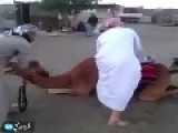 Camel Mount Fail !