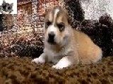 Cute Babies 2014 Collection Funny & Cute Baby Animals Compilation 2014