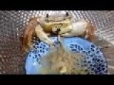 Crab Eating A Bowl Of Noodles