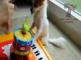 Compilation Funny Youtube Instruments Play And 2014 Animal Video !! Can Cute Animals !!