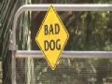 Central Florida Boy Killed By 2 Family Pit Bulls