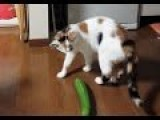Cats Scared By Cucumber Compilation