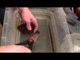 Cutting Open A Shark Egg