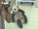 Cuddly Panda Baby Loves The Camera