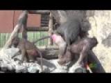 Cloak Monkey Mating