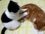 Cat Gives His Friend A Nice Massage