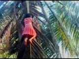 Crazy Little Girl Climbing Coconut Tree Like A Boss
