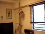 Cat's Shameful Fall From A Tower