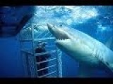Cage Diving With A Great White Shark Goes Wrong