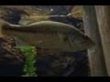 Cabelas Aquarium In Rogers, MN