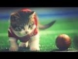 Cute Kittens Play Football! #KittenBowl