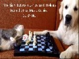Cat And Dog Play Chess