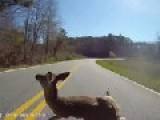 Cyclists Close Encounter With Deer