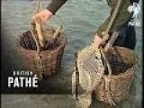 Cockle Fishing 1965