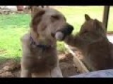 Cat Tries To Steal Treat From Dog - Regrets It Instantly