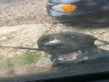 Crazy Canine Tries To Eat A Mans Truck - Antenna, Wipers, Mirror