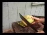 Cutting Open A Coconut Hawaii Vs Trinidad