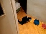 Cat Gets Startled By Cucumber