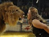Circus Lion Pounces On And Injures Egyptian Female Lion Trainer Faten El Helw