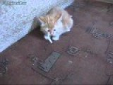Cat Wants To Smoke A Cigarette