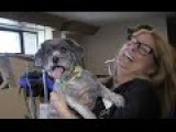 Comedian Tom Mabe Pranks The Kentucky Humane Society