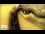 Crocodile Vs Anaconda Fight