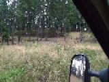 Can You Spot The Deer In The Top Picture? Here's The Video The Unaltered Picture Is From