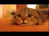 Cat Watching A Horror Movie