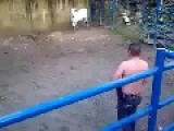 Cow Vs Man
