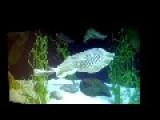 Crazy Critters At Ripley's Aquarium Canada