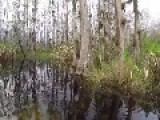 Cute Encounter With A Baby Alligator At A Swamp