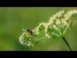 Canon 60 2.8 Macro Lens - Sample Videos F 2.8 - F 5.6