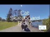 Cat Skateboard Ride