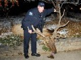 Cops Arrested For Shooting Elk In Boulder, CO. Update