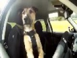 CRAZY...Dog Drives