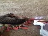 Cat Plays Death Hoax On Owner