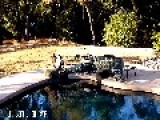 Clever Dog Kali Finds A Way Into The Pool