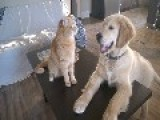 Cat And Dog Play Fight, Dog Pretends To Eat Cat