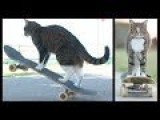 CAT Super Skateboarding Adventure! Go Didga! ORIGINAL