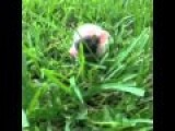 Cute Piglet Vine In 7 Seconds