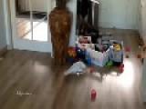 Cockatoo Relentlessly Throws Plastic Bottle Around Room