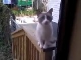 Cat Wants To Go Inside