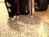 Cat And Ant Face Off In Showdown