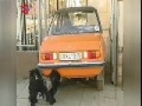Dog Sucks On A Car Exhaust