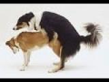 Dog Mating Up Close