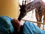 Dying Zoo Worker Gets Goodbye Kiss From Giraffe